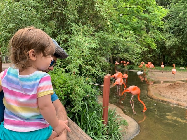toddler enjoying a trip to the zoo