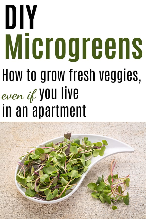 "Text ""diy microgreens - how to grow fresh veggies, even if you live in an apartment"" with a picture of microgreens"