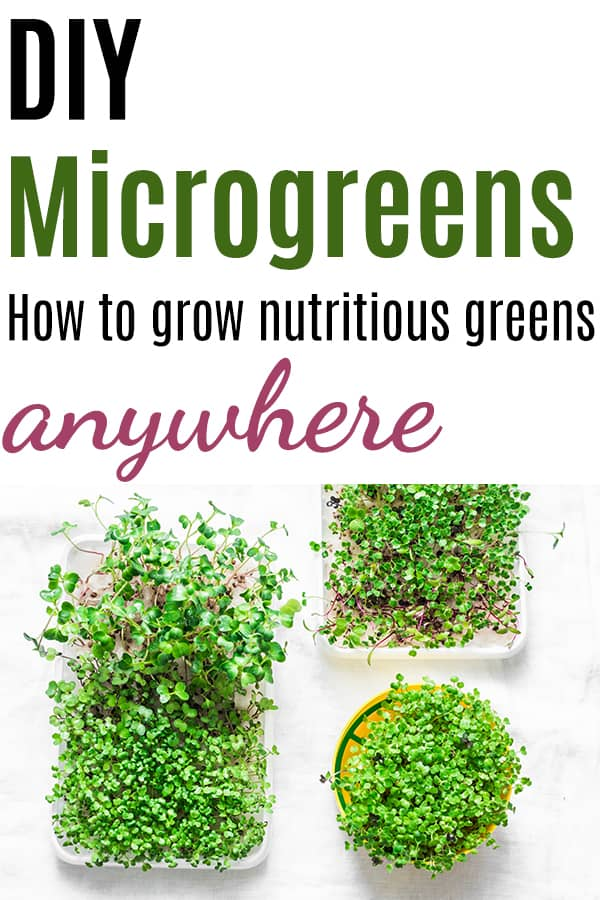 "Text ""diy microgreens - how to grow nutritious greens anywhere"" with a top down photo of three microgreen containers"