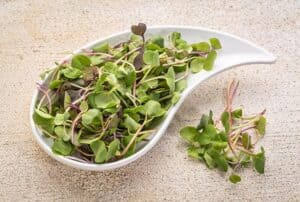 DIY Microgreens - How to Plant and Grow your own Microgreens (Updated for 2020!)