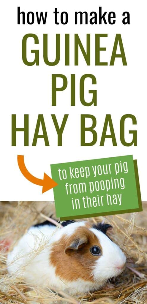 "Text ""how to make a guinea pig hay bag to keep your pig from pooping in their hay"" with a picture of a guinea pig sitting on a pile of hay"