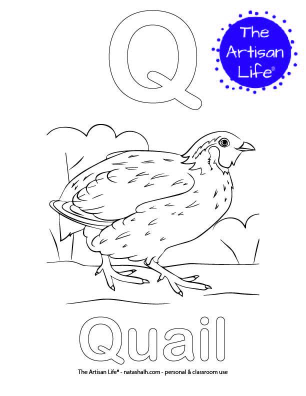 Coloring page with Q and Quail in bubble letters and a picture of a quail to color