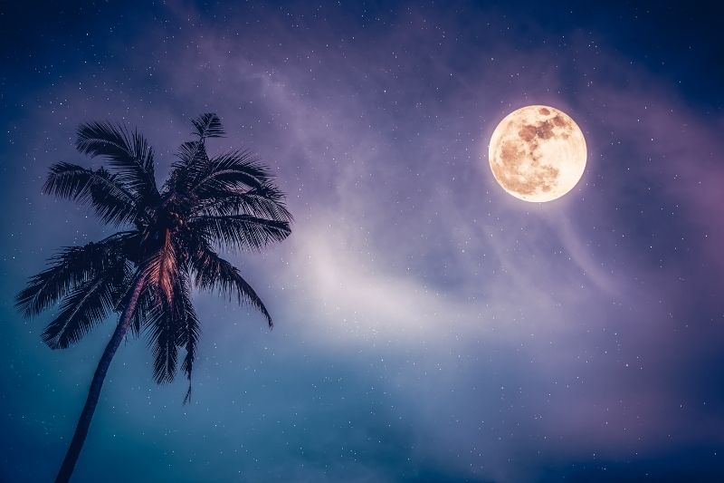 An image of the full moon in the night sky with a palm tree
