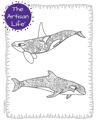 """A preview of an orca whale coloring page for adults. The page has two orcas with hand drawn doodles to color and the page is bordered by a doodle frame. A purple round logo reading """"the artisan life®"""" is in the corner."""