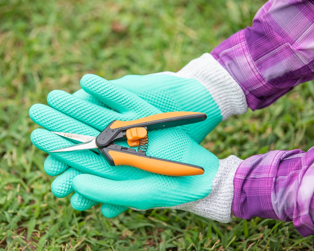 Hands wearing teal garden gloves and holding a small pair of orange and black handled garden snips.