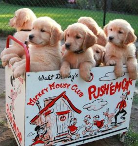 wow-blogadda-mondaymusings-life-is-a-box-of-puppies-puppies
