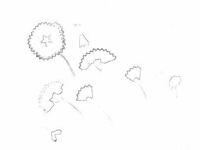 grey sketch