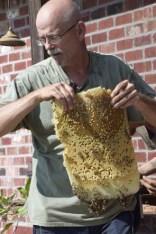 Bee Keeping1085
