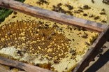 Bee Keeping1089