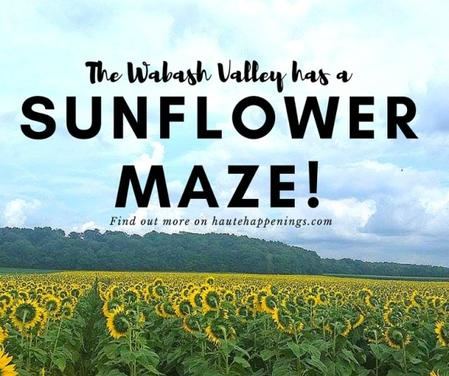 Wabash Valley Sunflower Maze