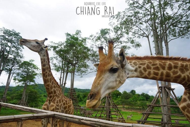Safari Zone at Singha Park   Chiang Rai