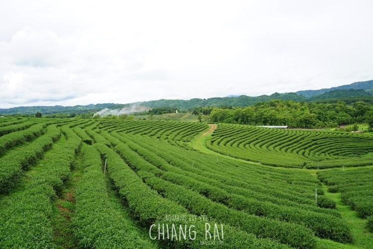 Choui Fong Tea House   Chiang Rai