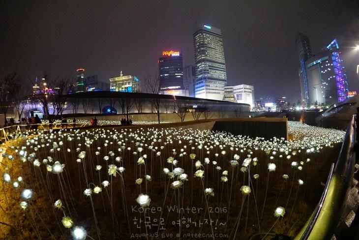 LED 장미 | Dongdaemun Design Plaza (DDP)