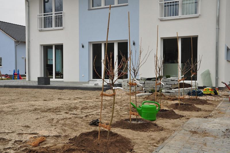 Frisch gepflanzte Sträucher vor dem Haus