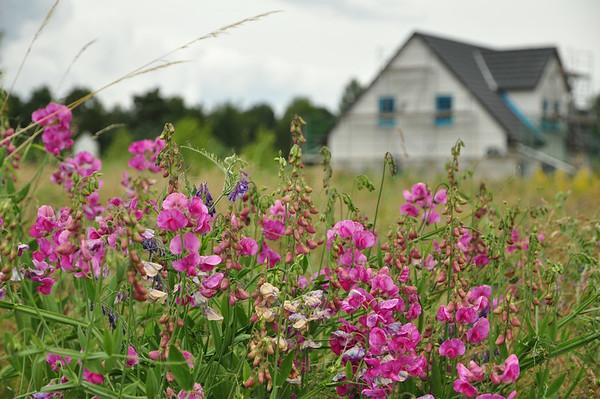 Schöne Wildblumen auf unserem Grundstück