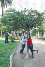 Barcelone, ville des amoureux sous un oranger