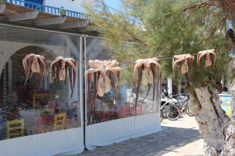 séchage de poulpes