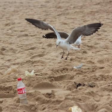 malheureusement, du laissez-aller sur les plages