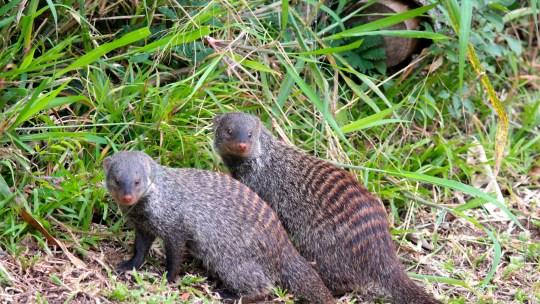 Petite virée dans le Parc iSimangaliso, Kwazulu-Natal, Afrique du Sud