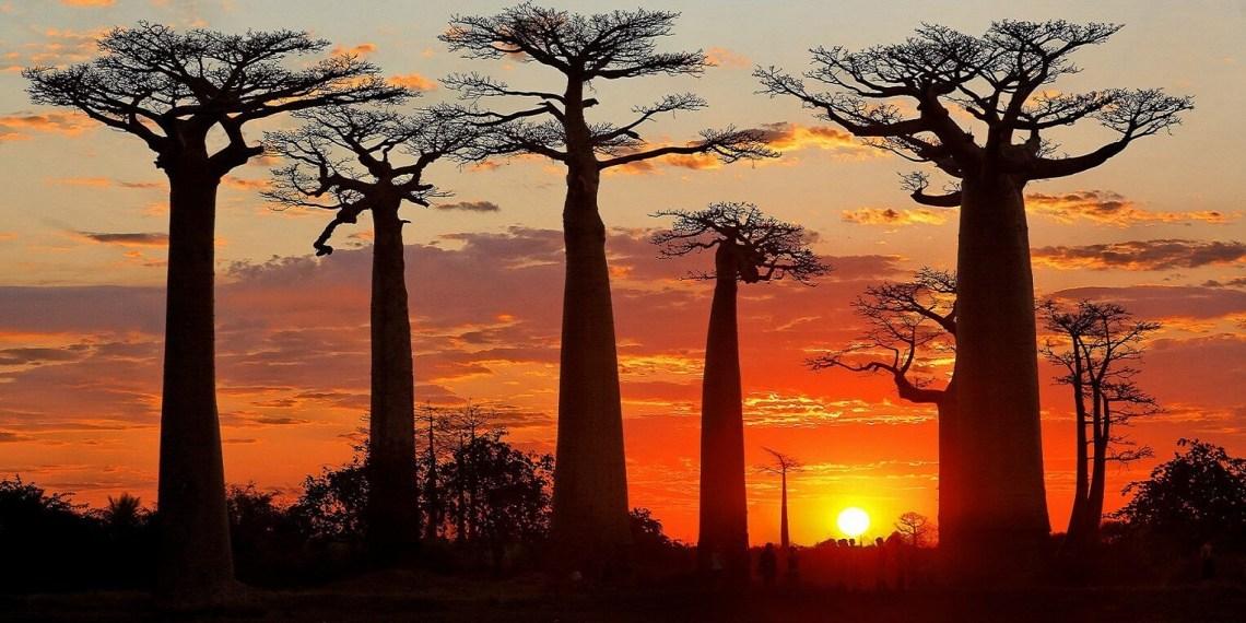 morondava-allee-des-baobabs-sun-set-1526-763.jpg