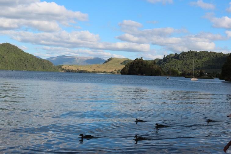 Le lac bleu de Rotorua