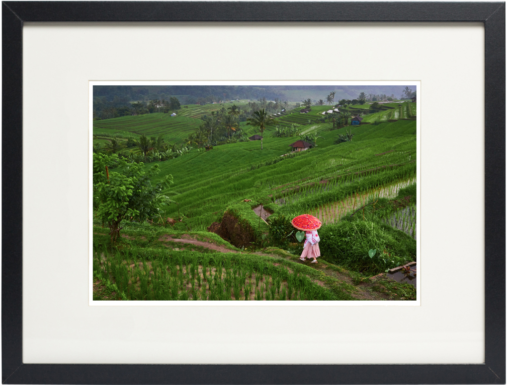 Photo of fine art print of Jatiluwih Rice Terrace on display.