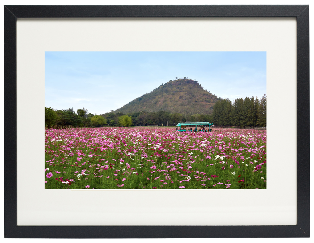Photo of fine art print Field of Flowers on display.