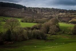Sheep and lambs at Goytre