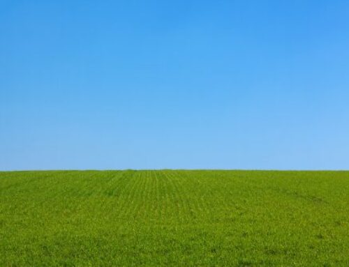 Grass is Greener Syndrome: The Starvation of Needs