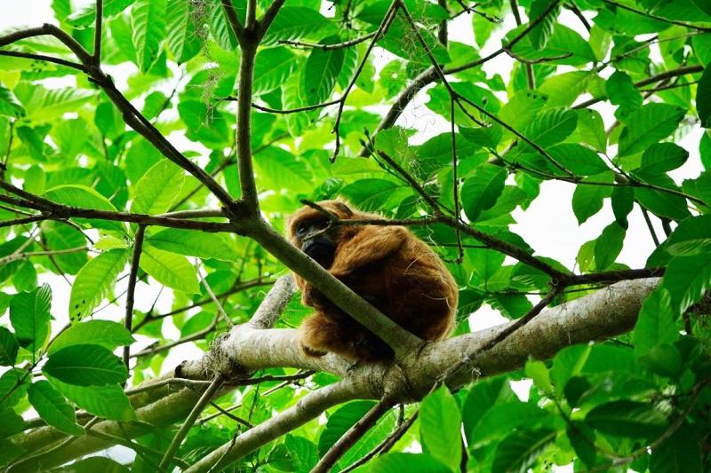 Confirmado: os 4 macacos mortos na Tijuca foram envenenados