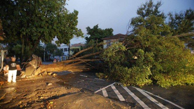 Chuva derruba árvore de 10 metros na rua Zenóbio da Costa, em Vila Isabel