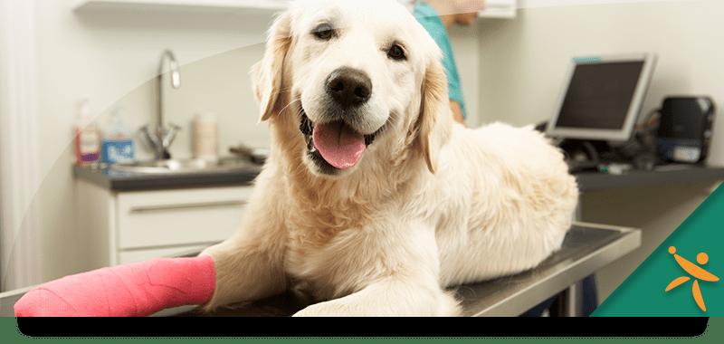 Les assurances animaux de compagnie