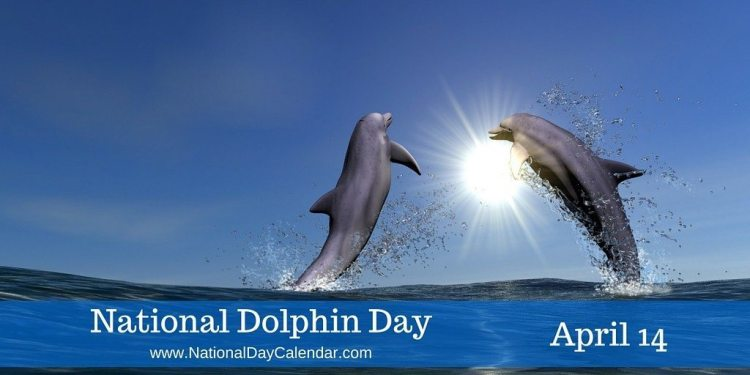National Dolphin Day - April 14