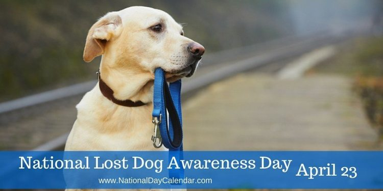 National Lost Dogs Awareness Day - April 23
