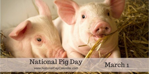 National Pig Day - March 1