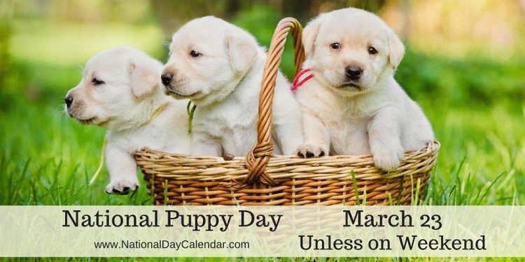 National Puppy Day - March 23 unless on weekend