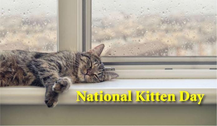 happy Kitten Day