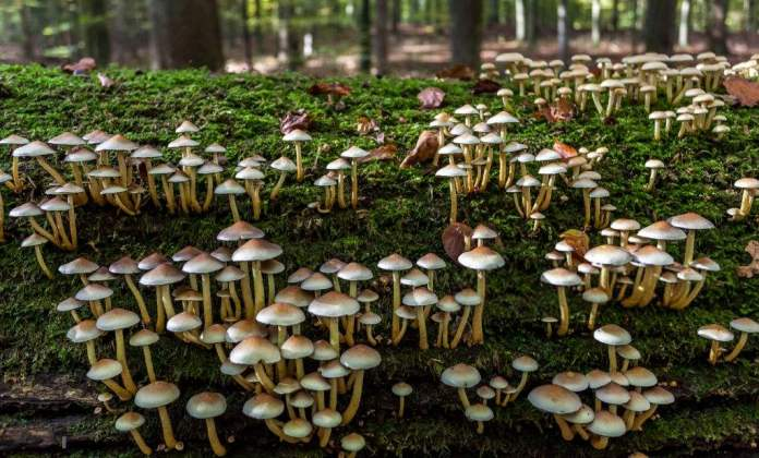 National Mushroom Day Quotes