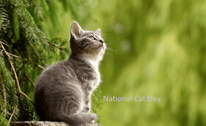 Happy Cat Day Images