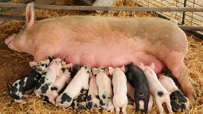the SQUEAL Act will cut back on washington's pork barrel abuse