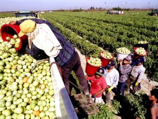 American agriculture does not depend on illegal immigrants