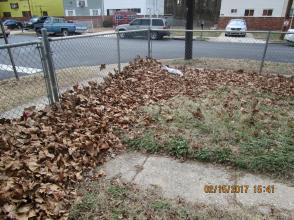 Unraked leaves in Prince George's County