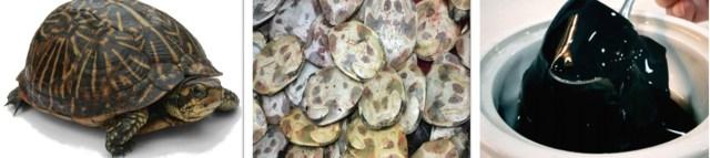 47 turtle jelly – hong kong