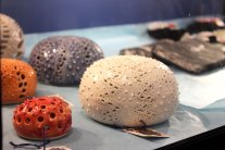 Sea Urchin pieces by Victoria Silvera