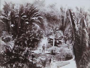 A. Duperley and Sons - Castleton Gardens(1901), Collection: NGJ