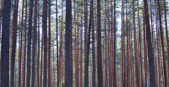 Managing Risk Through Diversification: Notes on Timberlands