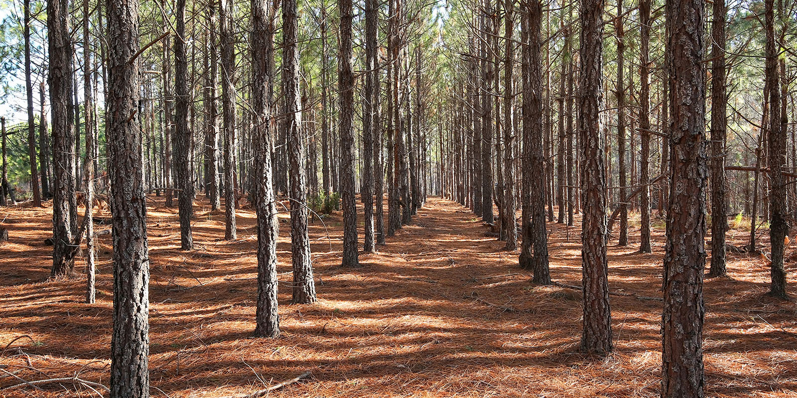 Investment Opportunities in Timber REITs and Forestlands: Are You