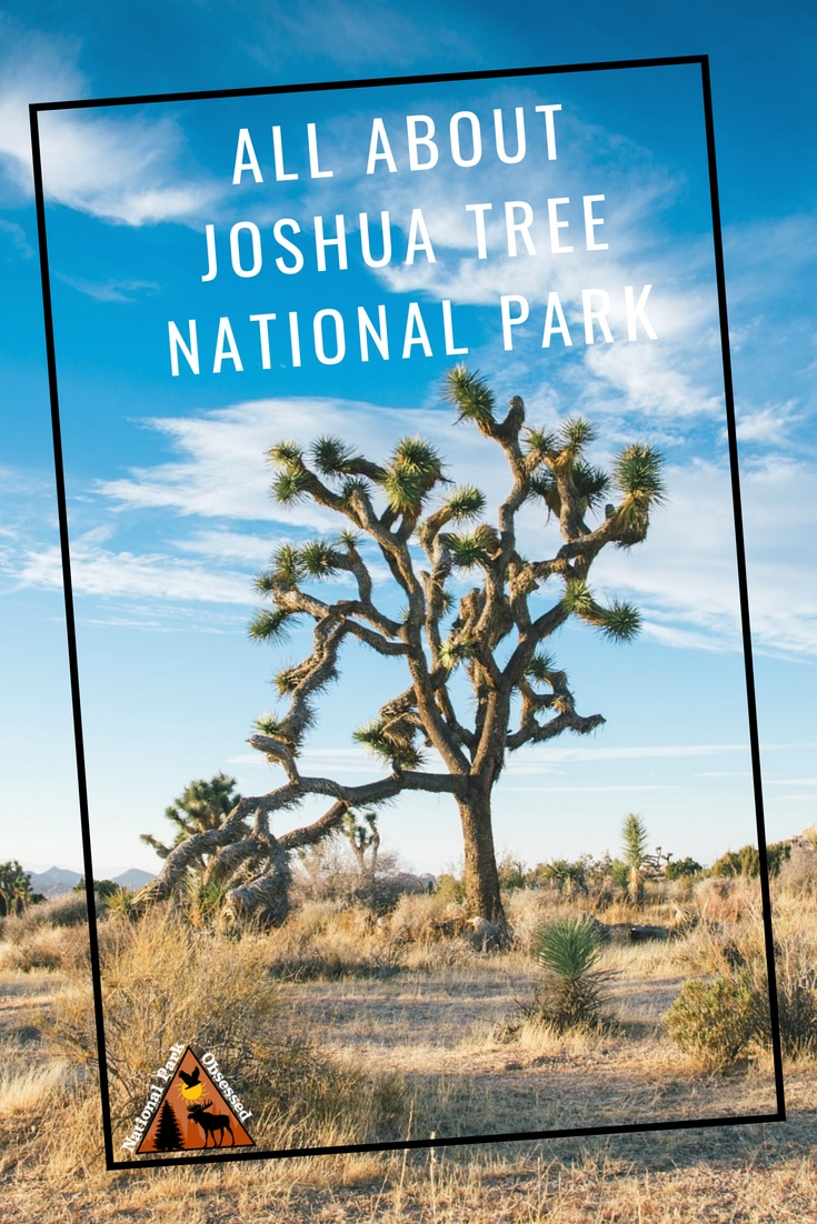 Planning to visit @JoshuaTreeNPS? Don\'t know where to start. Let #NationalParkObsessed help you plan your trip to #JoshuaTree with guides, itineraries, things to know and much much more  #nationalparkgreek #califorina #joshuatree #joshuatreenationalpark