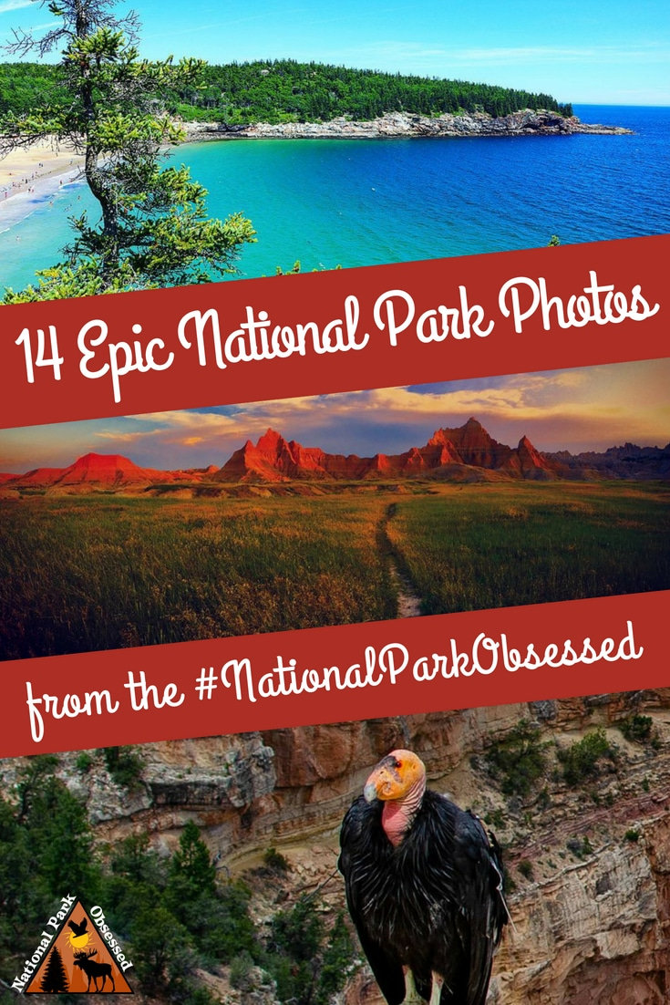 Check out some of the most epic national park photos from the #NationalParkObsessed community. July 2018 has been a hoot and here are the best photos. #nationalparkgeek #findyourpark #nationalpark #nps #nationalparks