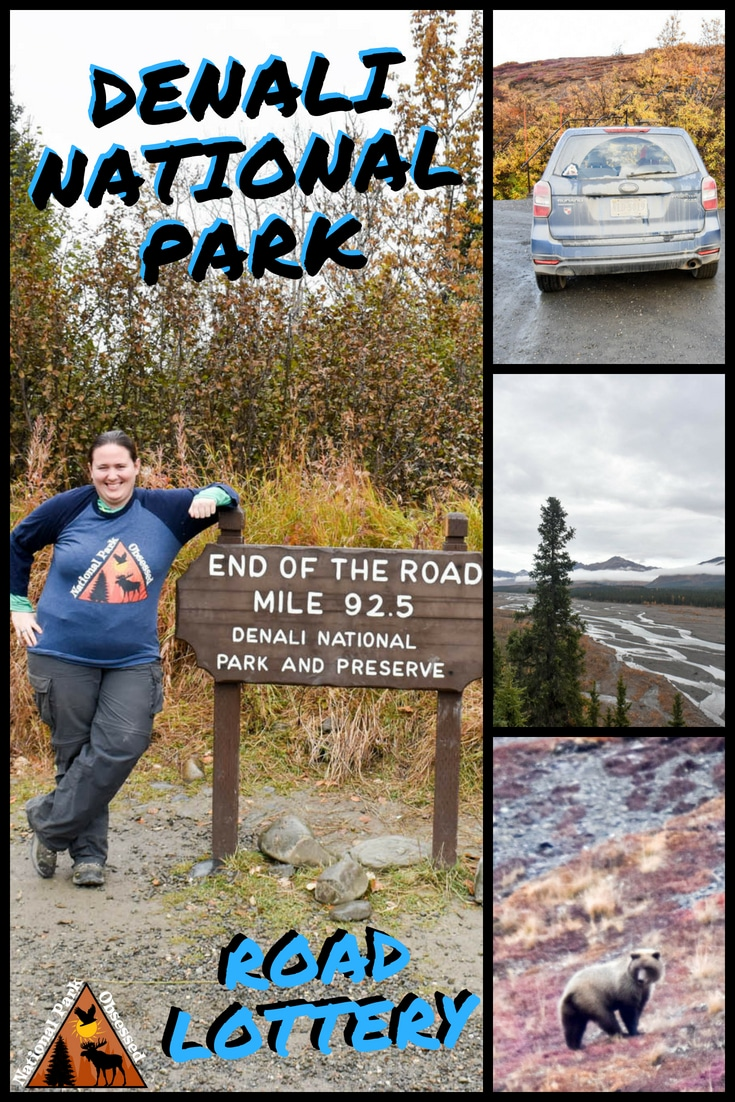 Are you thinking about driving the Denali Road Lottery? Do you have questions about how the lottery works? Check out our ultimate guide to the road lottery. #nationalparkobsessed #nationalpark #nationalparks #nationalparkgeek #denali #alaska